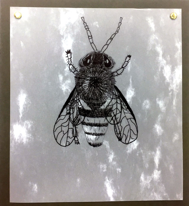 Bee Illustration Art Lesson / www.smallhandsbigart.com